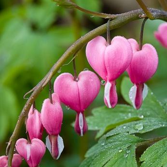 amore-per-le-piante-noipensiamo