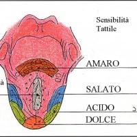 Tecnica della degustazione – L'esame gustativo