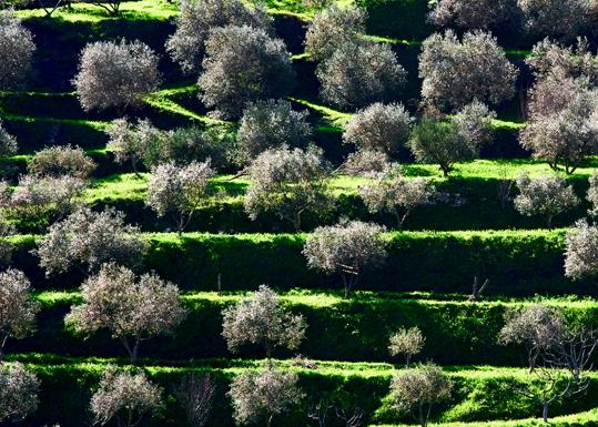 Terrazze Liguri